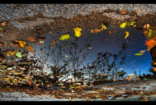 Reflections Of Autumn by angryastronomer