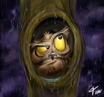 Owl at rain by timwell
