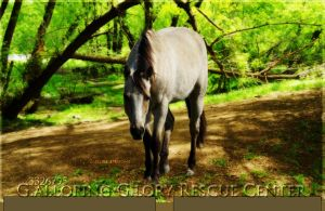 GallopingGloryLayout by oceancoralgraphics
