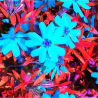 Blue flakes  by littlemissscarface