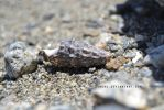 The Shell Of Life by Daneas