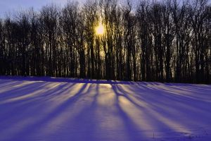 Shadow land by aripi