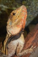 Lucy Lizard 2 by AdamsWife