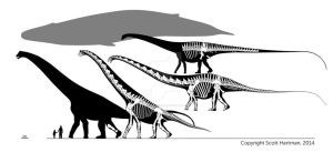 Sauropod-whale face off by ScottHartman