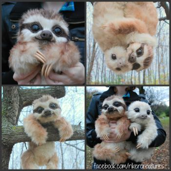Baby Three-Toed Sloth - Handmade Poseable Creature by RikerCreatures
