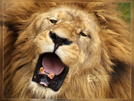 Yawn by Narked-Photographer