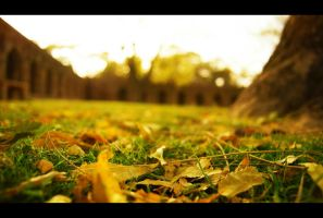 Autumn by malaykeshav