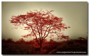 TREE-1 by coolpixlover74