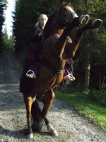Horse rearing- stock by Ulvar-Stock