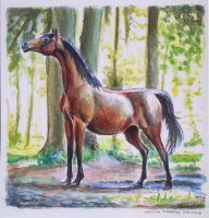 Horse watercolor gift by Twarda8