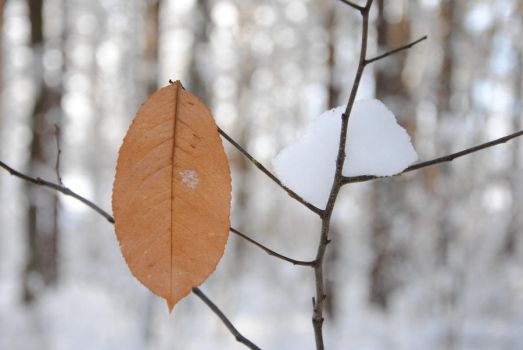 Leaf, But Don't Leave Me. by pietermaurits