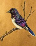 Violet-Backed Starling by KristynJanelle