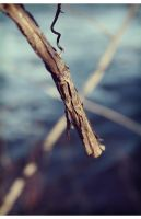Branches II by niceparabola