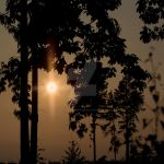 sunset behind trees by photographybypixie