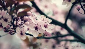 The Colour of Spring by FeliDae84