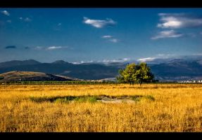 Yellow-blue landscape by Grofica
