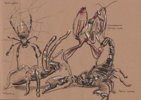 Traditional Sketching 2 - Insects and Spiders by IgnazioDelMar