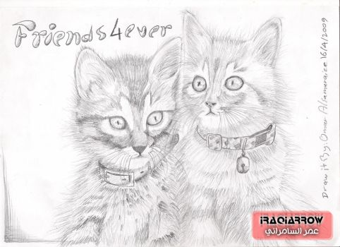 Friends 4 Ever - Cats by iraqiarrow