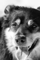 Happy dog by PhotographyChris