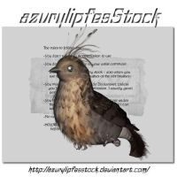 3D object - Bird1 by AzurylipfesStock