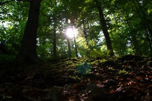 Early morning in the forest by Patguli