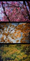 Colour of SeasonS by MRBee30
