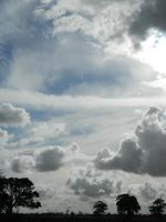 Cloudy Sky with Trees 003 - HB593200 by hb593200