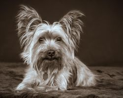 Snoopy by PascalsPhotography