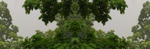 Organic Symmetry 12 by meathive
