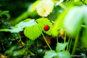 Wild strawberry by everythingisaverage