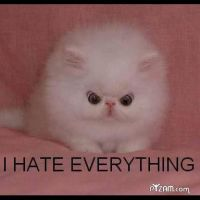 i hate everything by fiskerton52802