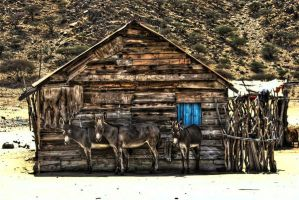 HDR the 3 friends by M-AlJabarty