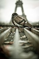 Rusty Pigeon by thecorvidking