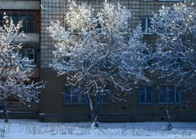 First Snow 2010 Novosibirsk by gamebalance