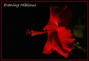 Evening Hibiscus by TThealer56