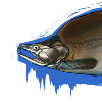oncorhynchus gorbuscha by sister-in-arms