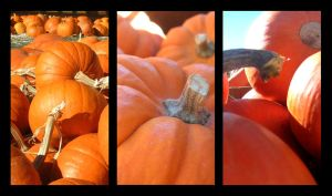 Pumpkins by BurningHeart9046