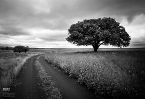 King of the road  by kunstphoto