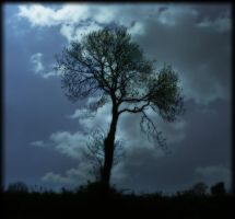 TREE by TADBEER
