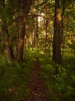 Forest paths by feainne-stock