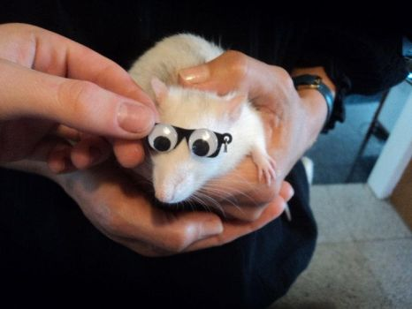 rat with glasses by SenjiCrow