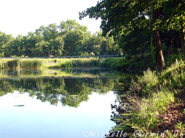 A Pond Paradise: Peoria, IL by bittersweet-twist