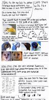 Bird Facial Expressions Tutorial by ProjectOWL