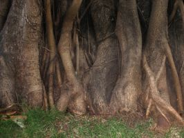 roots7 by DivsM-stock