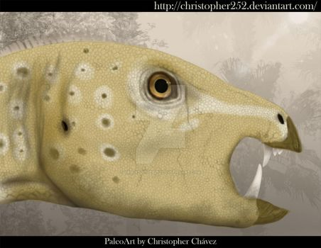 Heterodontosaurus tucki by Christopher252