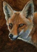 Red Fox ACEO by elektroyu