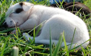 Puppies - Pinky nap by Angelos-Griever