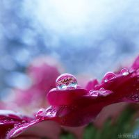 raindrops.1 by simoendli