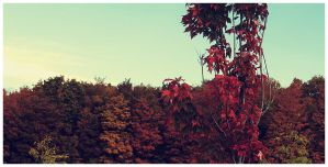 Autumn - iii by DrZapp