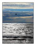 surfing in Silver by 13-septembre